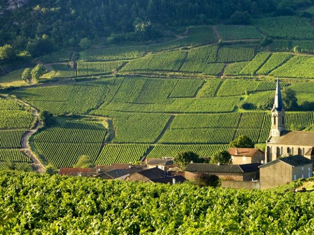 Loire_valley_sauvignon
