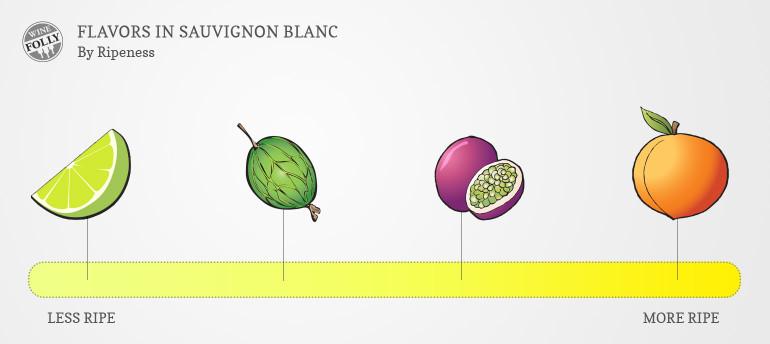Sauvignon-blanc-taste-profile-by-ripeness-770x344