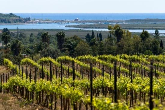 algarve-wine-experiences